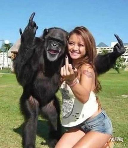 黑猩猩版美女与野兽