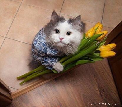亲爱的,嫁给我好吗