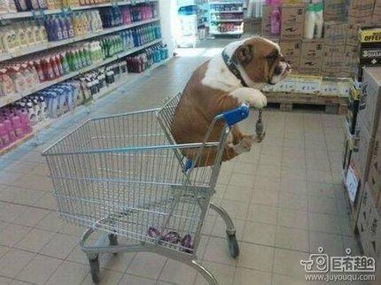 给我拿一下那个狗粮