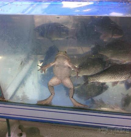 总觉得盆友家的鱼缸怪怪的