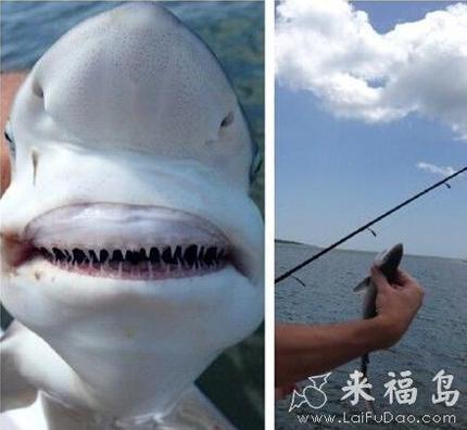 出海遇上鲨鱼差点就死了